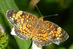Schmetterling, Florida; © Ruth Kvech